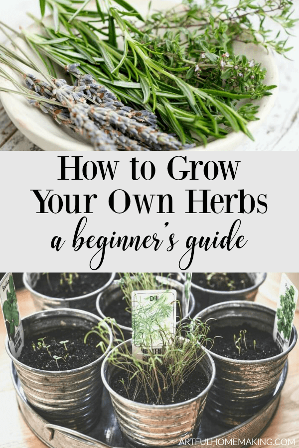 How to Grow Herbs for Beginners