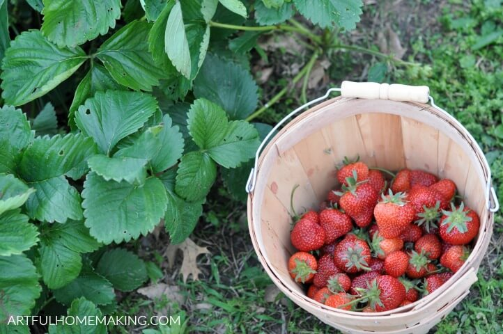 gardening for beginners strawberries