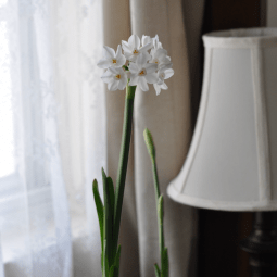 Spring Homemaking