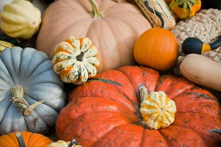 fall pumpkins and squash